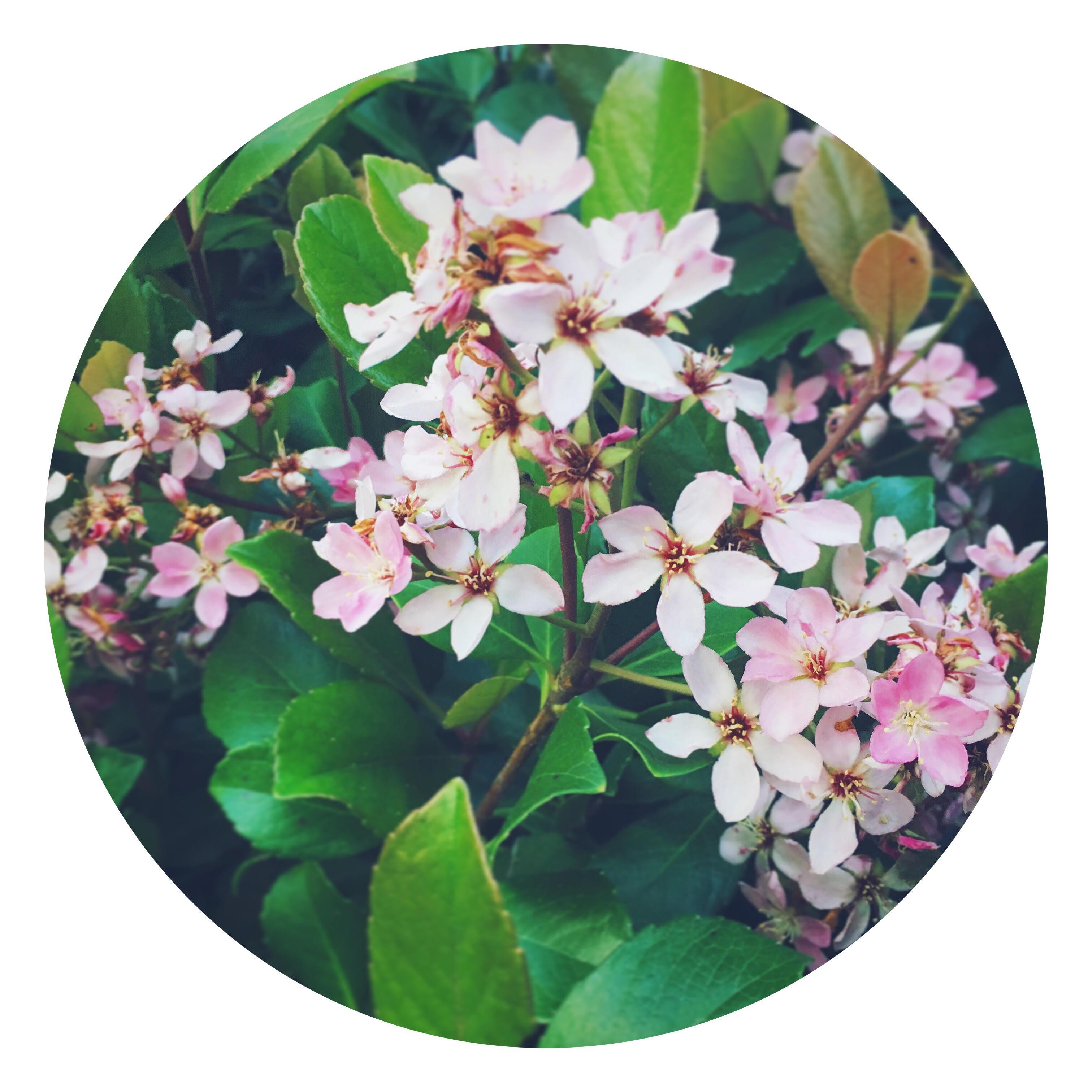 A Wandering Flower